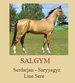 Salgym